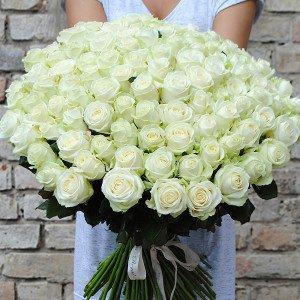 101 rožė ''Avalanche''