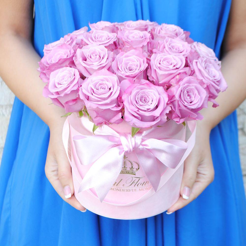 Violetinės rožės AR/M Velvet
