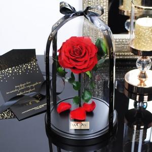 Mieganti rožė po stikliniu gaubtu