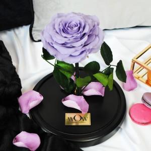 Mieganti rožė po stiklu Lilac