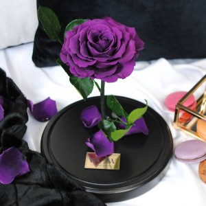 Mieganti rožė po stiklu Purple